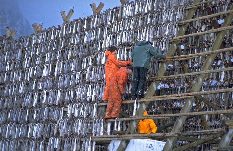 14-020=N-0329-N-Nordland, Lofoten, Trockenfischherstellung
