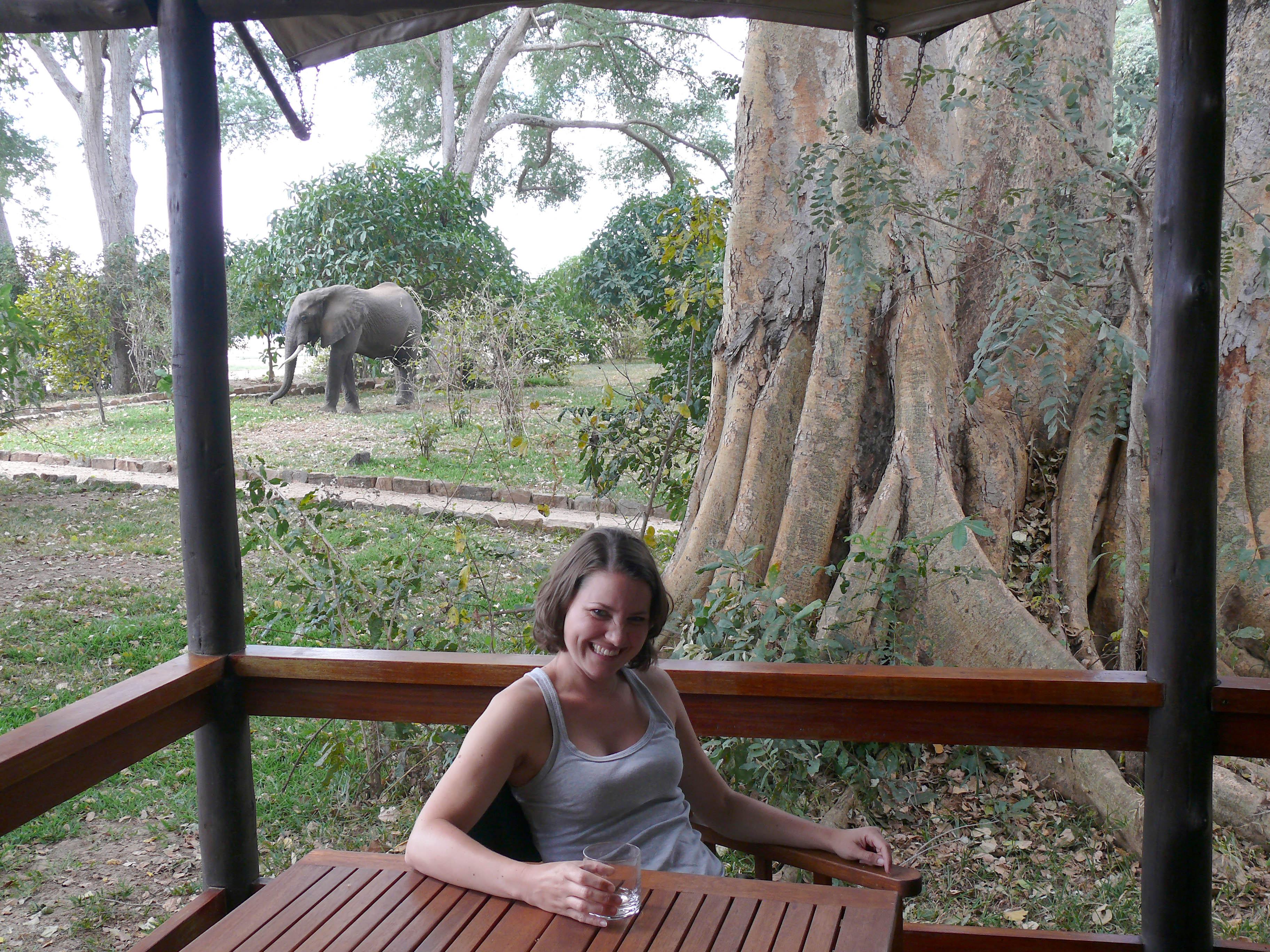 Knoller, Lugenda Lodge Elefant im Vorgarten tz