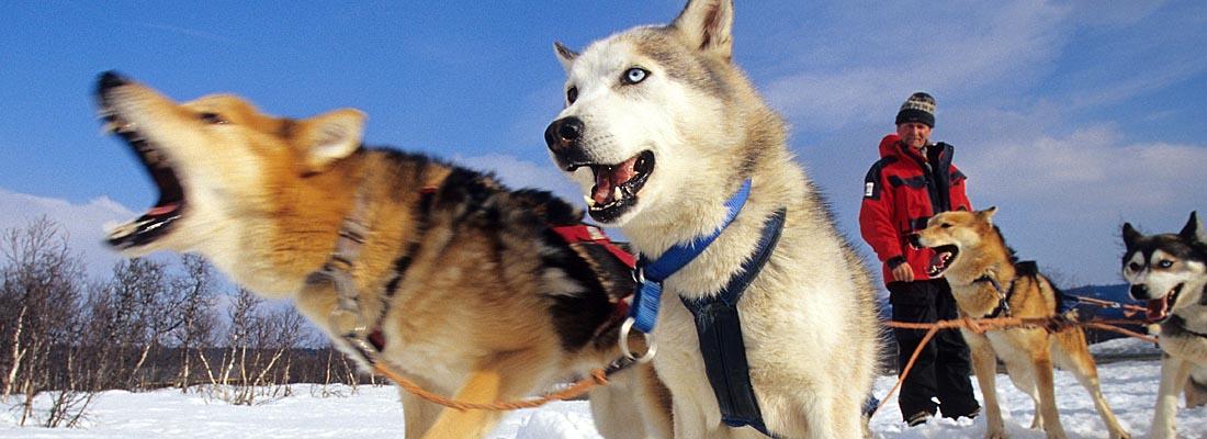 Norwegen:  Hundeschlittengepann im Jotunheimen