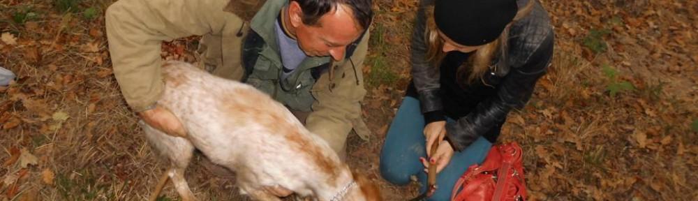 Trüffelsuchhund, Foto: Susanne Kilimannwein