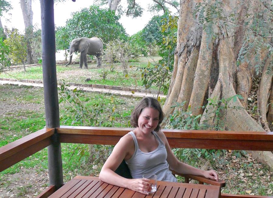 Lugenda-Lodge-Elefant-im-Vorgarten-tz-1024x768aa