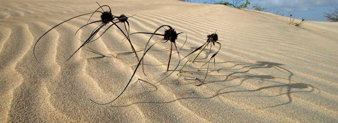 Cabo Verde: Boavista – Sonne, Sand und schöne Strände